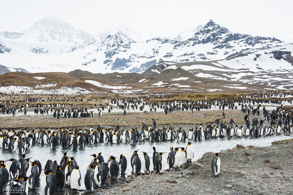 Wedding in Antarctica Adventure Wedding