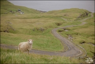 Faroe Island Wedding Photographer-1