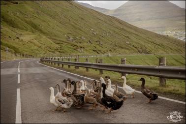 Faroe Island Wedding Photographer-3