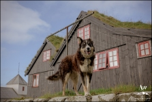 Faroe Islands Wedding Photographer-2