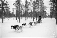 Your Adventure Wedding Planner and Photographer Kakslauttanen Igloo Village Hotel Dog Sledding
