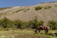 Patagonia Wedding Photographer-Torres Del Paine-Your Adventure Wedding-6