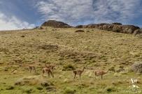 Torres del Paine Patagonia Wedding - Your Adventure Wedding-9