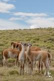 Torres del Paine Wedding Patagonia- Your Adventure Wedding-2