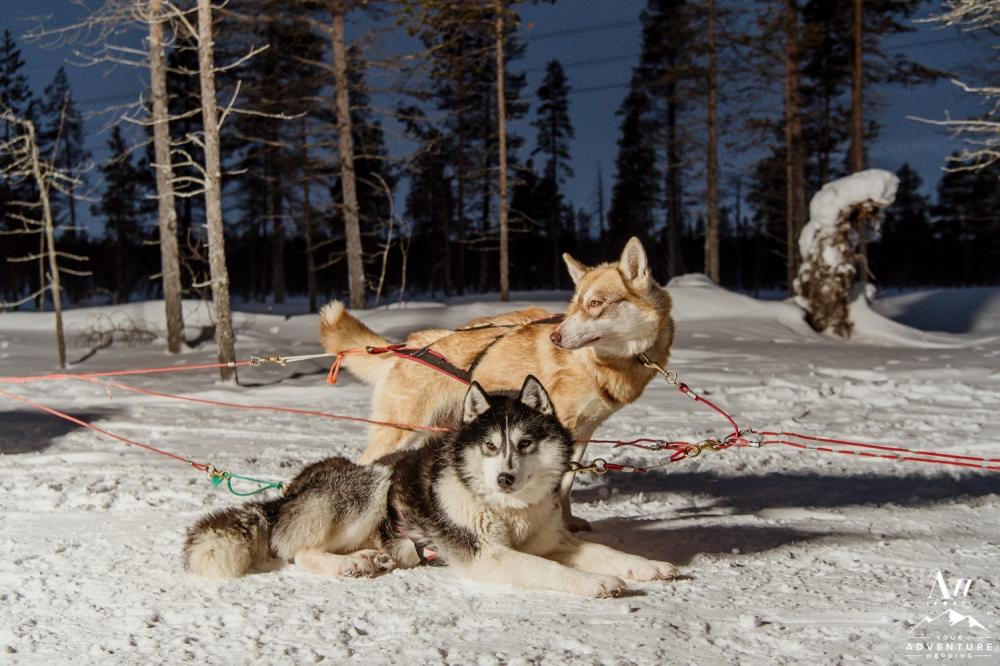 lapland-adventure-wedding-finland-wedding-planner-20