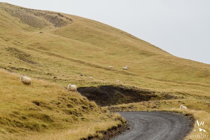 Iceland Wedding Photographer-Your Adventure Wedding-79